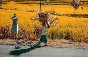 Остров Бали доставка товаров